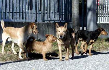 Cani randagi alla stazione ferroviaria di Catania